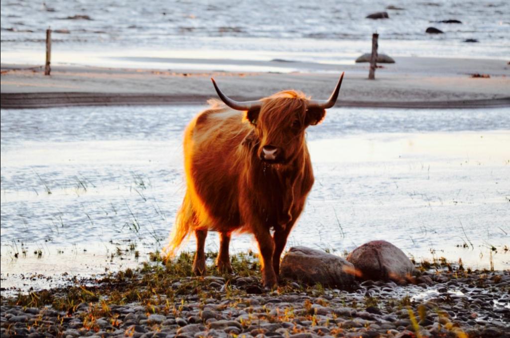 Šoti Mägiveis